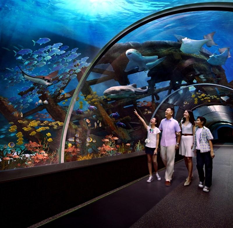 深海世界,海洋动物表演场,海龟池,海豹池,海盗城堡,3d4d影院,少儿科普